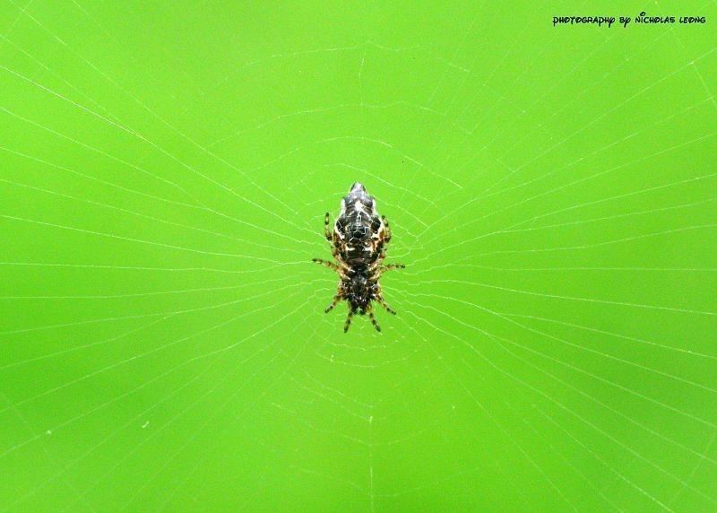 A weird spider