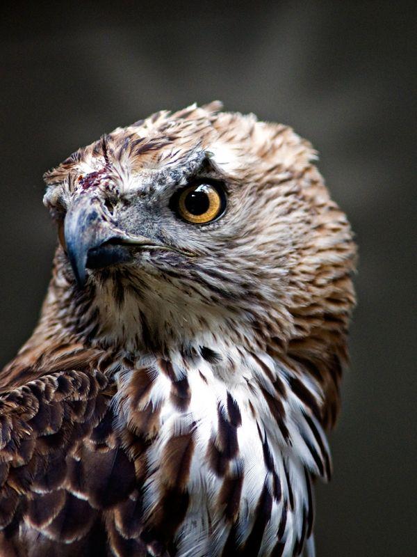 An eagle stare