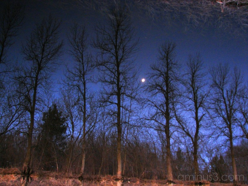 Moon and trees reflected in water