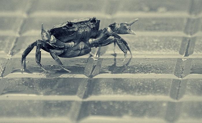 Crab-fu