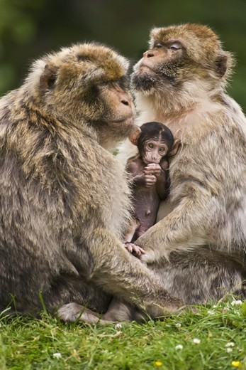 monkey parents