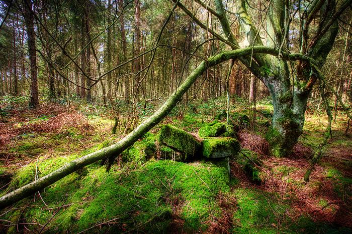 peak district forest
