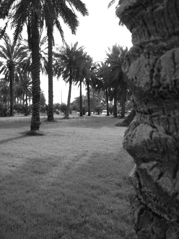 Shahid Chamran University Of Ahwaz