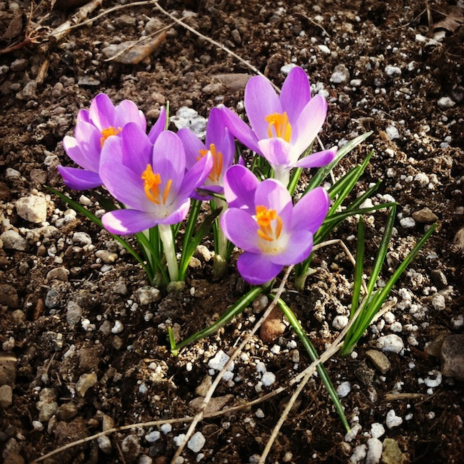 spring in slc
