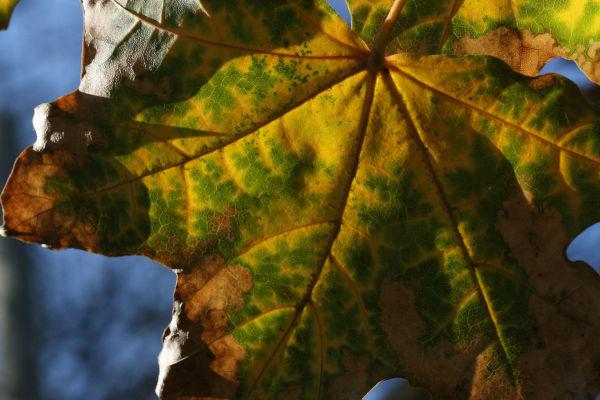 Variations on a Leaf