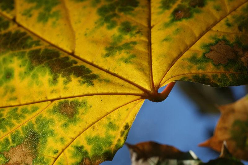 Variations on a Leaf 2