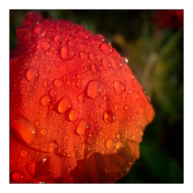 drop red macro