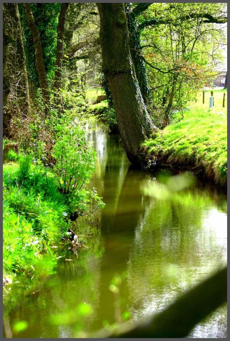 Brook near water mill in Wenum Wiesel, Apeldoorn