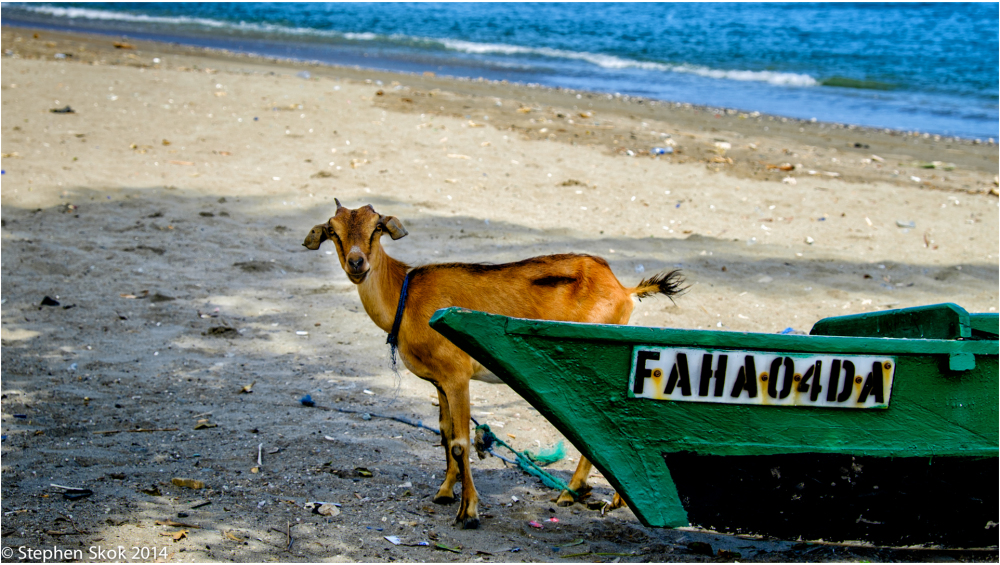 Dili Timor Leste beach wild life  Fuji X-E2