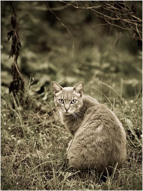 Classic cat portrait