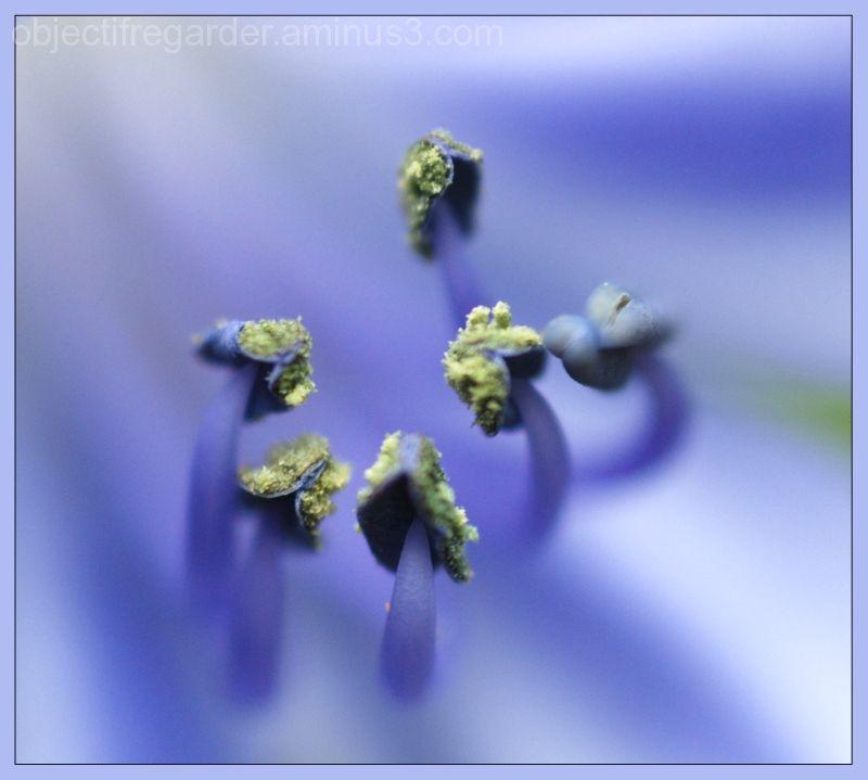 blue pistils
