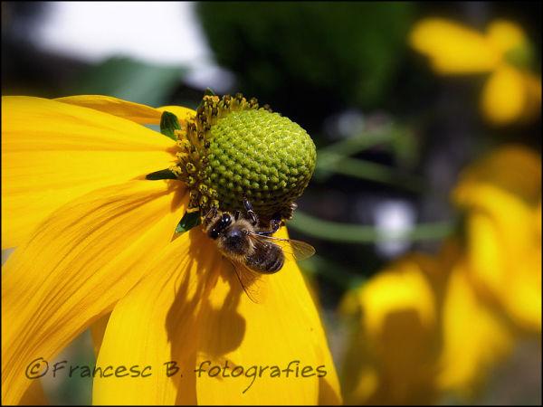 L'abeille et son ombre