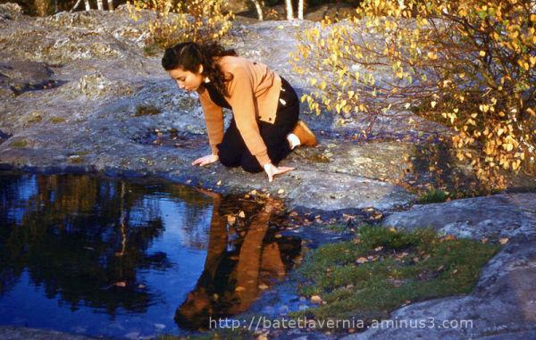 Automne 1955 - Forêt de Fontainebleau