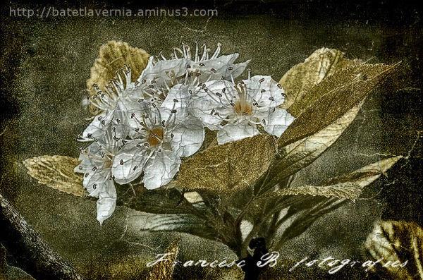 Vintage spring - 2