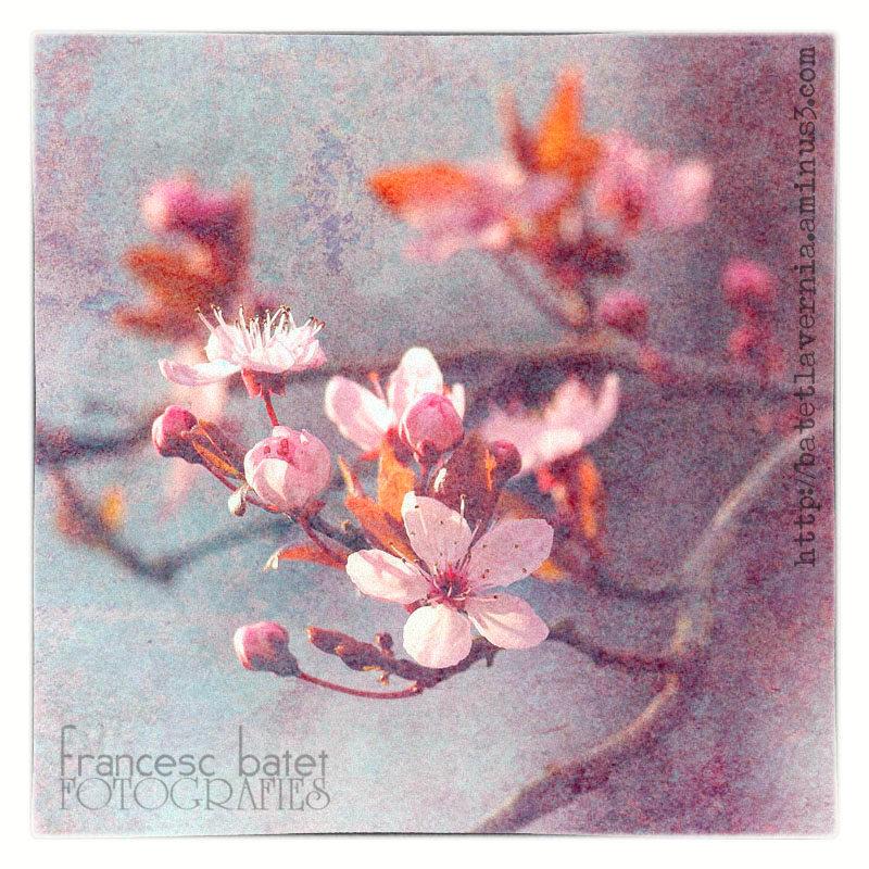 En rose et en textures