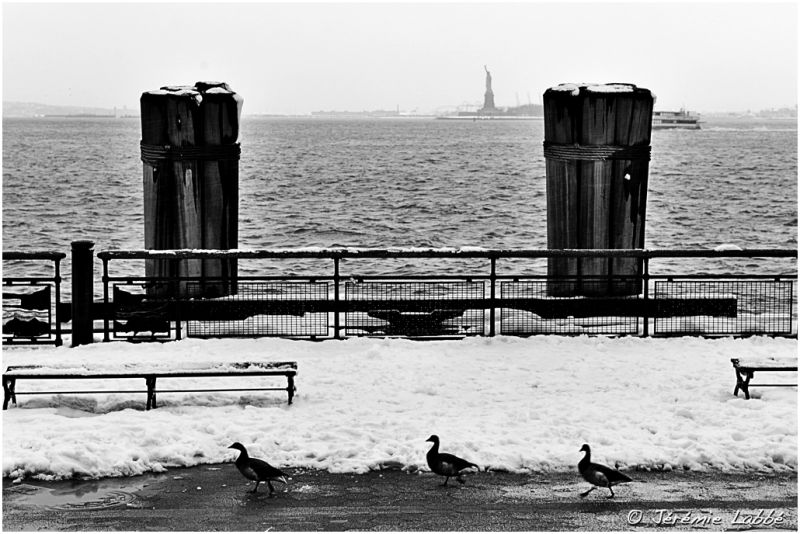 Three ducks along a pier, Battery Park, New York