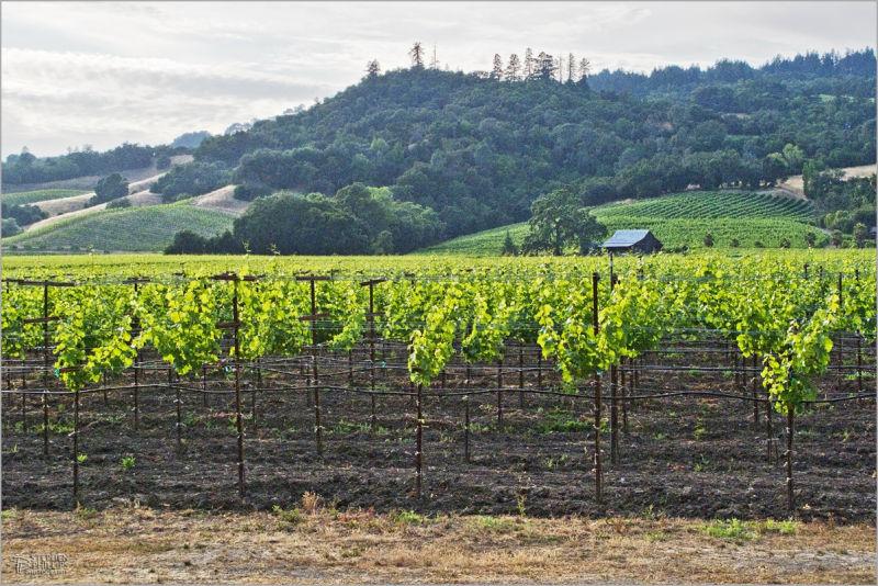Alexander Valley Sonoma County, California