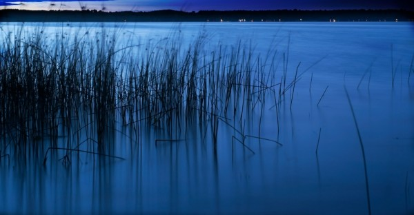 In the lake at night