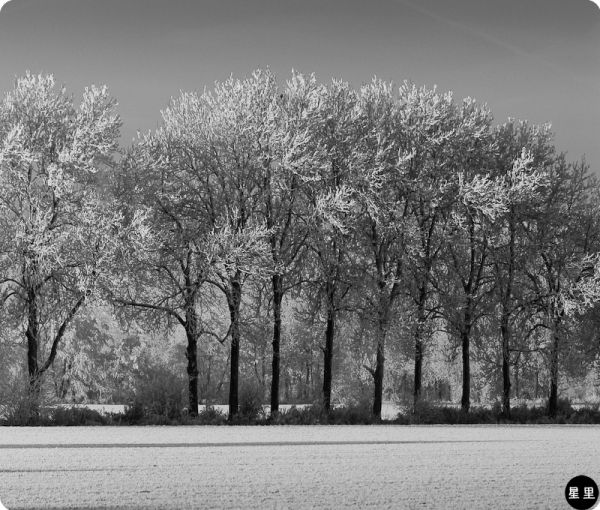 Snowy Dutch landscape