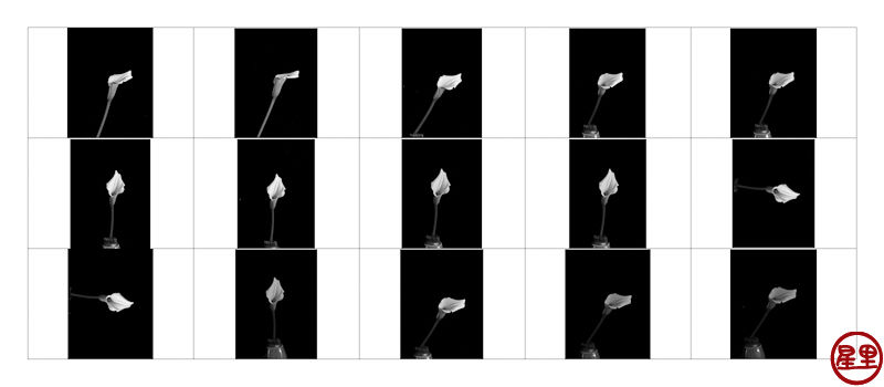 Contact sheet Calla Lilies, Pentax 645NII shoot