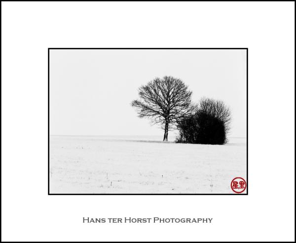Trees in fields of snow