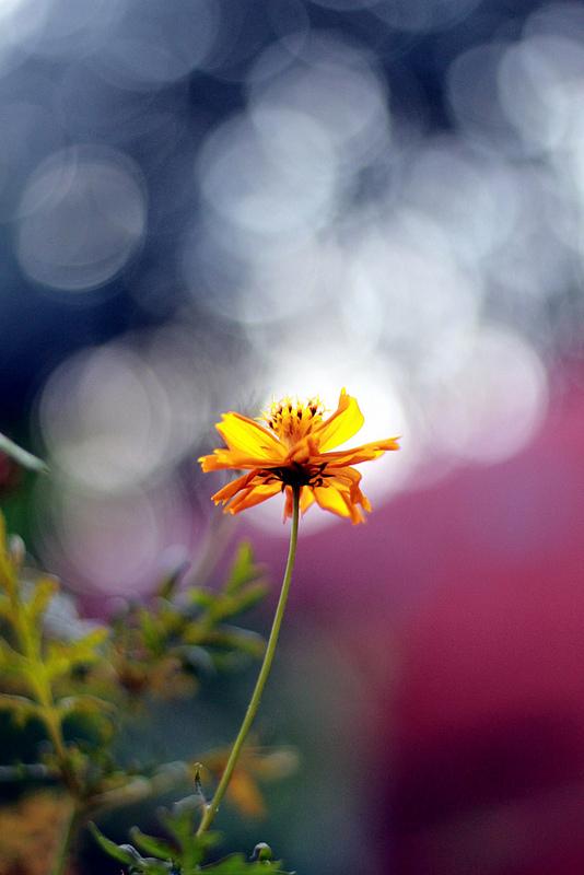 petals of fire