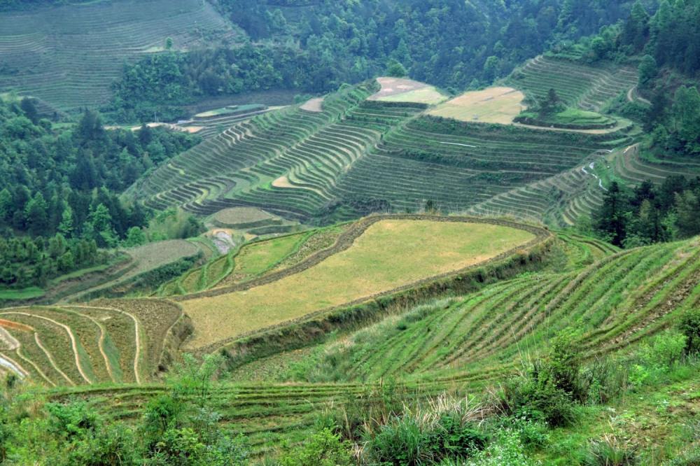 Longsheng Rice Terraces (2)
