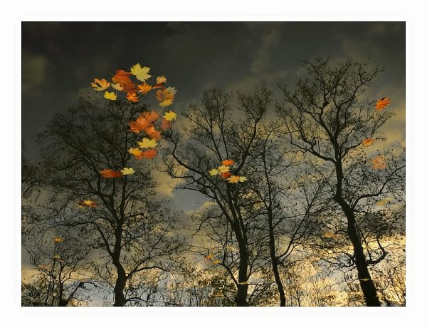 reflet  feuilles  automne