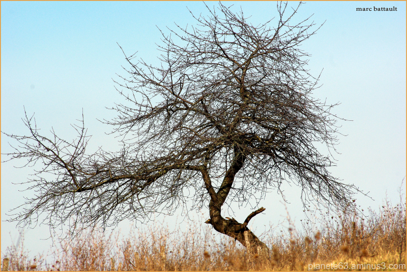 l'arbre danseur .........................