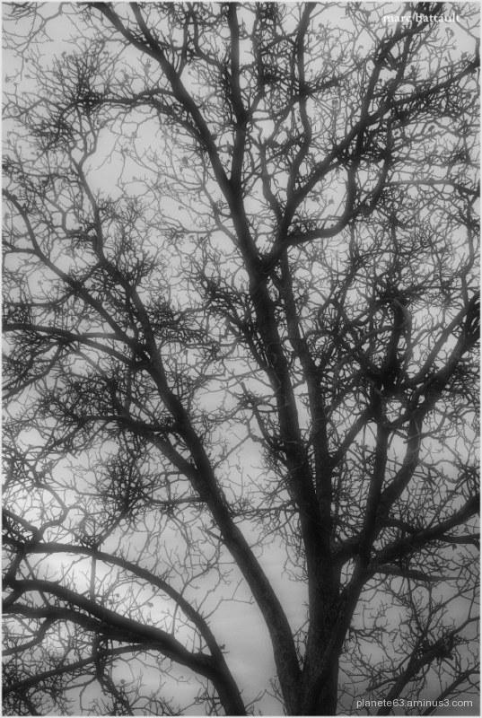 l'arbre de vie ...............................
