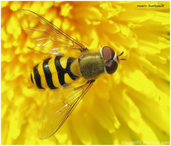 les ailes du printemps ...........................