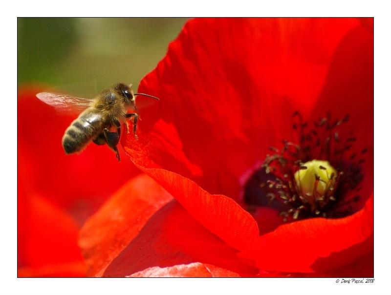 [ La petite abeille et la fleur déçue ]