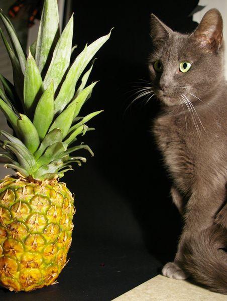 L'histoire folle d'un chat et d'un ananas