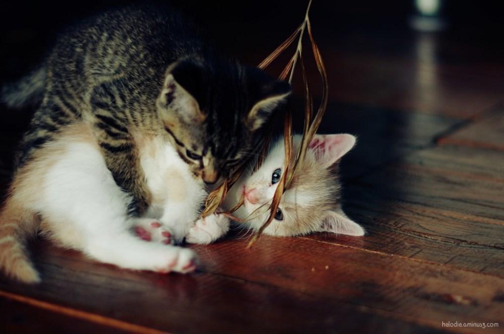 L'amour filial