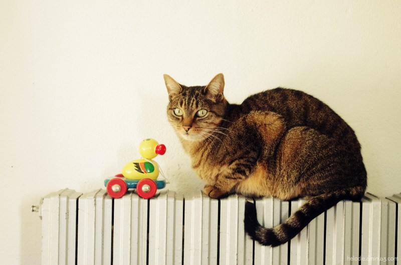 petit canard vintage et camarade sur radiateur animal insect photos helodie. Black Bedroom Furniture Sets. Home Design Ideas