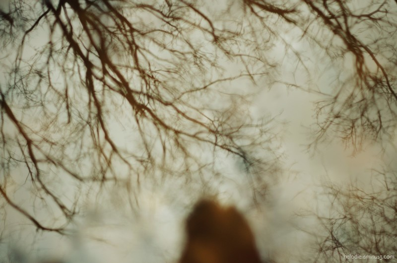 Flaque branchue