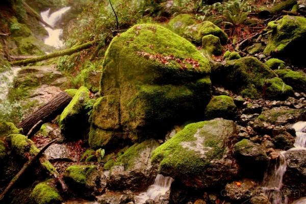 A Convergence of Streams, Marin Falls, California