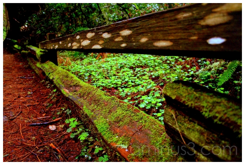 Wooden Fencing, Muir Woods, California