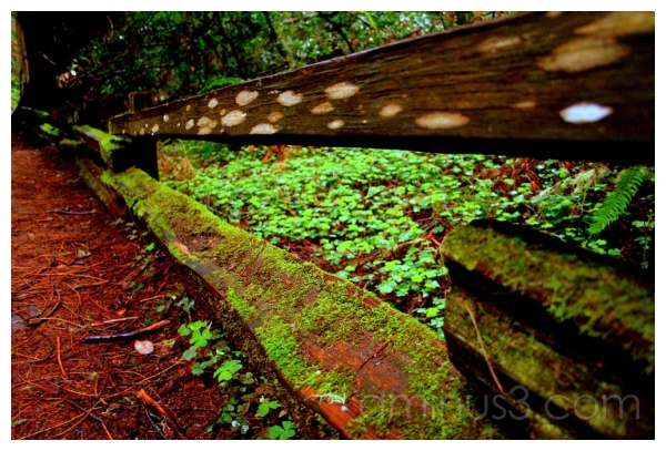 Wooden Fencing, Muir Woods, California