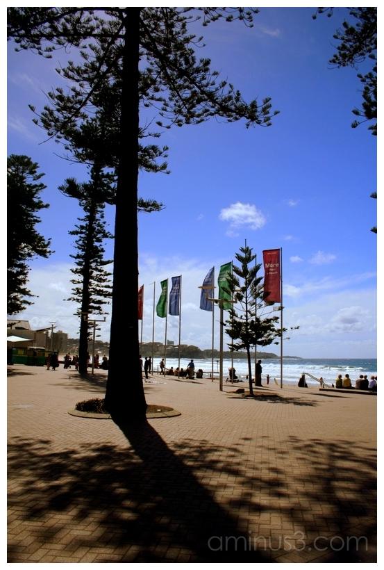 Corso w/ Norfolk Pines, Manly Beach, Australia
