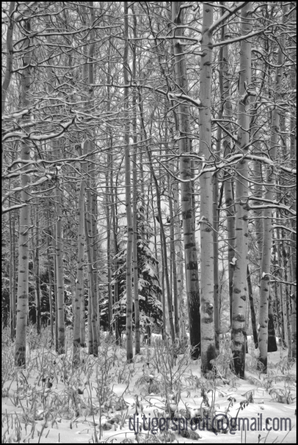 A Walk in the Woods (On a Snowy Evening)
