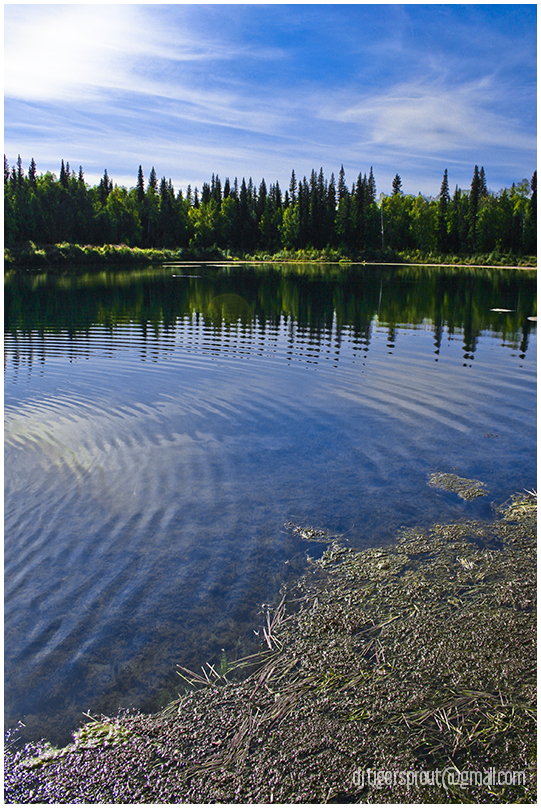At Water's Edge (RGB), Central Alaskan Wilderness