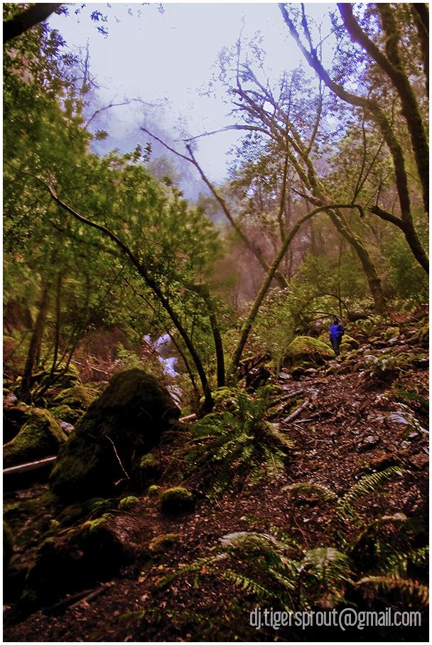 Return to Wonderland (Muir Woods, California)