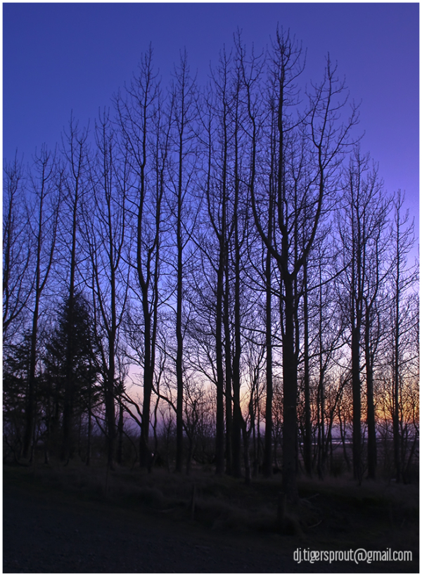 A Silent, Twilight Thicket, Southern Iceland