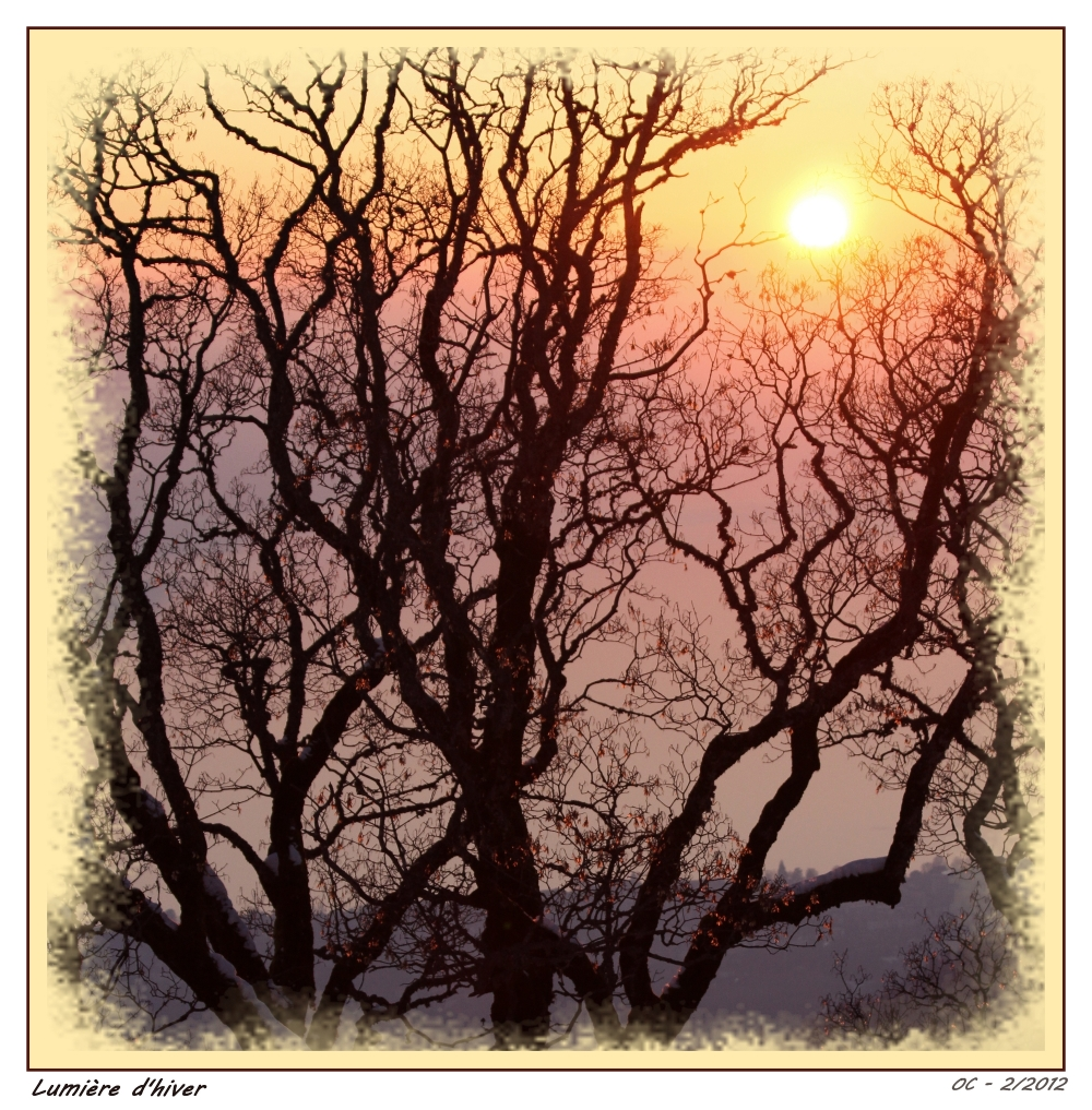 Lumière d'hiver through a tree