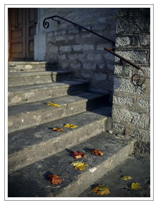 Marches d'escalier et feuilles d'arbre