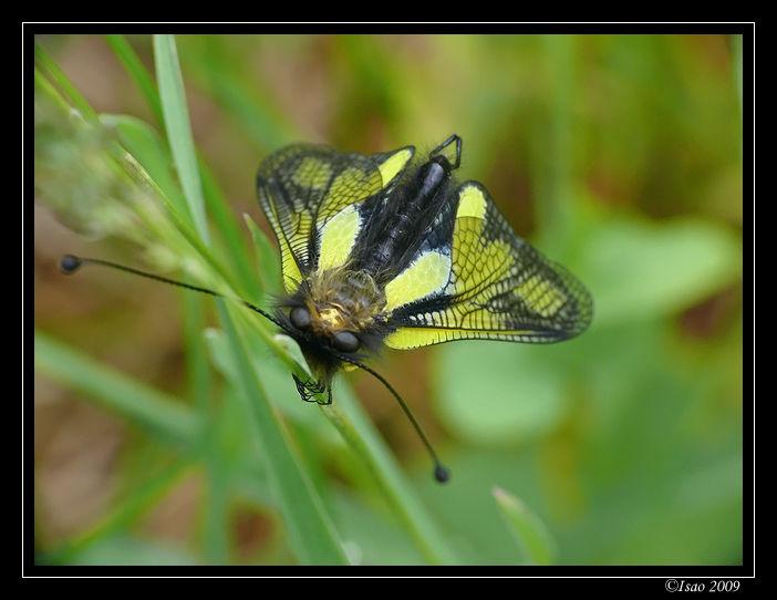 Entre la Libellule et le Papillon...