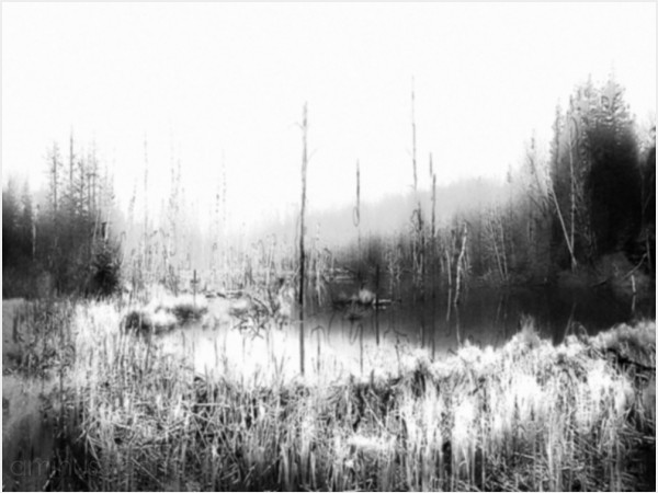 fog beaver pond black and white desolate stillness