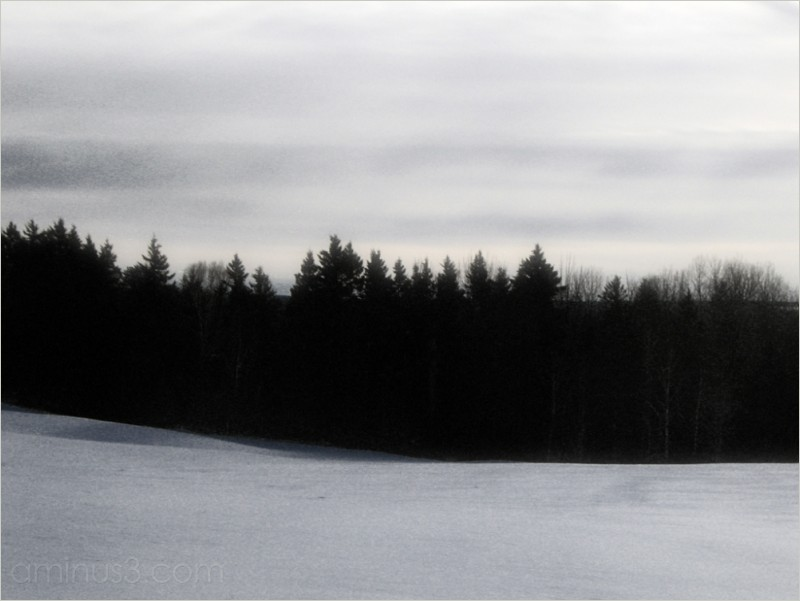 winter treeline field grey-sky flat-light roamin