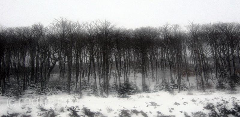 winter-storm mountain-pass trees embankment roamin